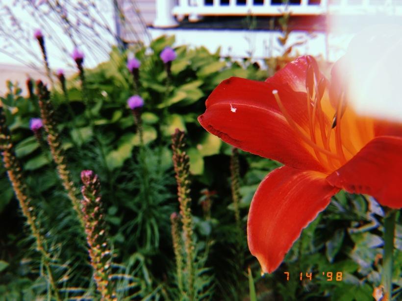 Floral gardens 2